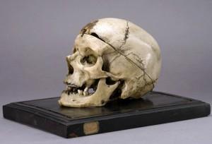 Il cranio di Villella esposto al Museo Lombroso di Torino.